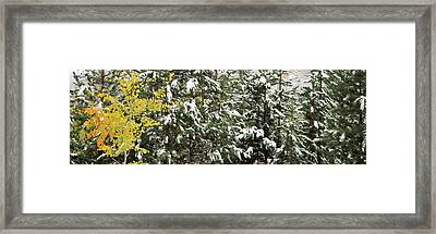 Trees Covered With Snow, Grand Teton Framed Print by Panoramic Images
