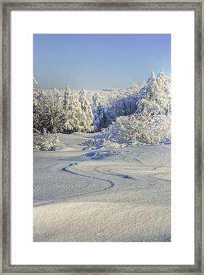 Trees Covered With Snow In A Sunny Winter Day Framed Print
