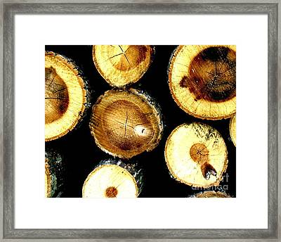 Framed Print featuring the photograph Trees End by Amy Sorrell