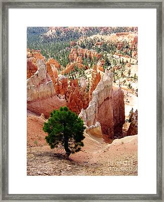 Framed Print featuring the photograph Tree's Eye View by Meghan at FireBonnet Art