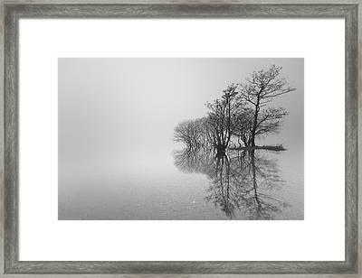 Trees Framed Print by Grant Glendinning