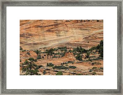 Trees Growing On The Wall Framed Print
