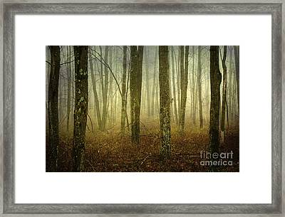 Trees II Framed Print by Debra Fedchin