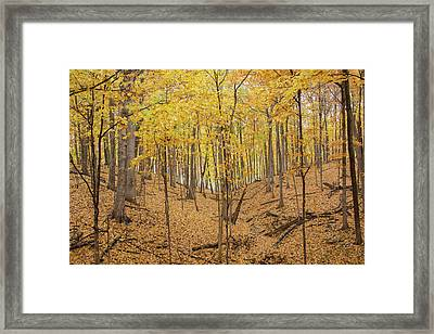 Trees In A Forest During Autumn Framed Print by Panoramic Images