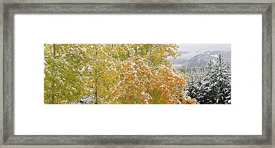 Trees In A Forest, Grand Teton National Framed Print by Panoramic Images