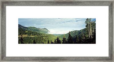 Trees In A Forest, Hurricane Ridge Framed Print