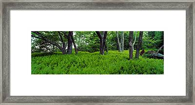 Trees In A Forest, North Carolina, Usa Framed Print by Panoramic Images