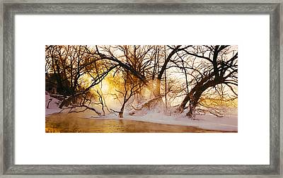 Trees In A Forest Framed Print by Panoramic Images