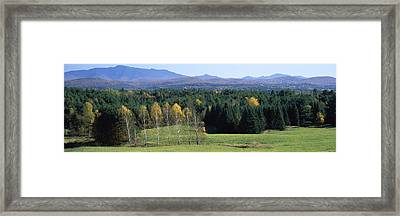 Trees In A Forest, Stowe, Lamoille Framed Print by Panoramic Images