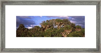 Trees In A Forest, Venice, Sarasota Framed Print by Panoramic Images