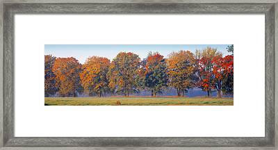 Trees In A Garden, South Bohemia, Czech Framed Print by Panoramic Images