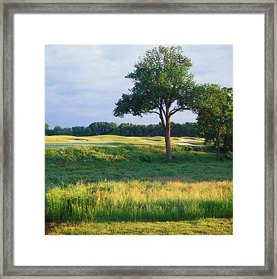 Trees In A Golf Course, Heron Glen Golf Framed Print
