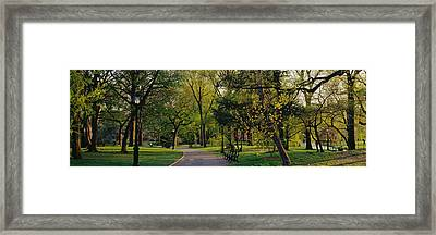 Trees In A Park, Central Park, Nyc, New Framed Print by Panoramic Images