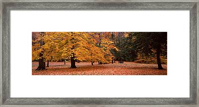 Trees In A Park, Chestnut Ridge County Framed Print by Panoramic Images