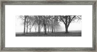 Trees In A Park During Fog, Wandsworth Framed Print by Panoramic Images