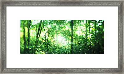 Trees In A Rainforest, Arenal Region Framed Print by Panoramic Images