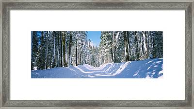 Trees In A Row On Both Sides Of A Snow Framed Print by Panoramic Images