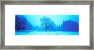 Trees In A Snow Covered Landscape Framed Print by Panoramic Images