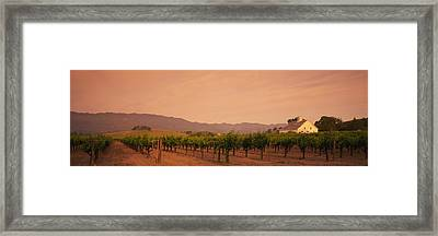 Trees In A Vineyards, Napa Valley Framed Print