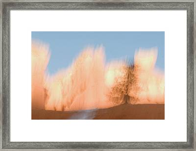 Trees In Bryce Canyon National Park Framed Print