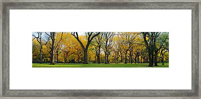Framed Print featuring the photograph Trees In Central Park by Yue Wang