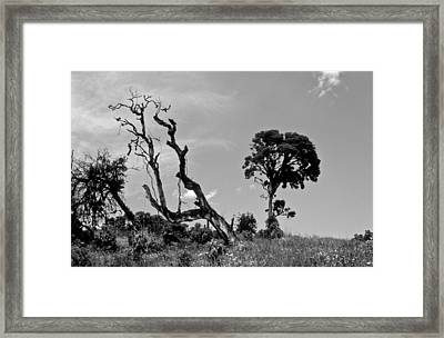 Framed Print featuring the photograph Trees In Cloud Forest by Lana Enderle