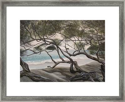 Trees In Costa Rica Framed Print