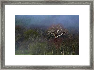 Trees In Fog 4 Framed Print by Dena Kidd