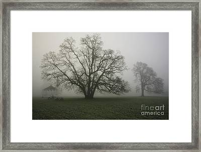 Trees In Fog Framed Print by Rich Collins