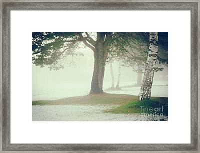 Framed Print featuring the photograph Trees In Fog by Silvia Ganora