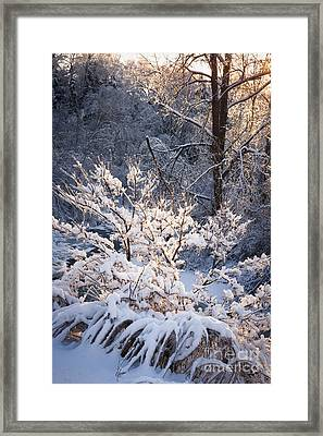 Trees In Forest After Winter Storm Framed Print by Elena Elisseeva
