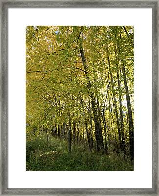 Trees In Forest, Te Anau-milford Road Framed Print