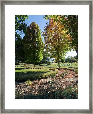 Trees In Lavender Field, Wanaka Framed Print