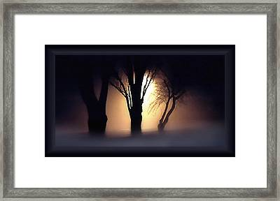 Trees In Midnight Fog Framed Print by Steve Ohlsen