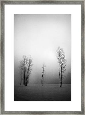 Trees In Mist Framed Print by Davorin Mance