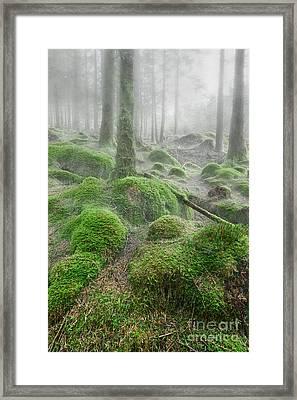 Trees In Mist Framed Print by Rod McLean