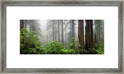 Trees In Misty Forest Framed Print by Panoramic Images