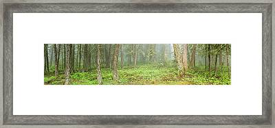 Trees In Montane Forest During Fog Framed Print