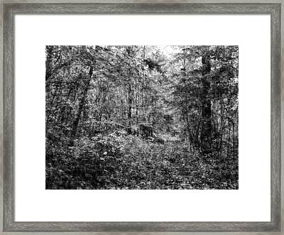 Trees In Pencil Framed Print