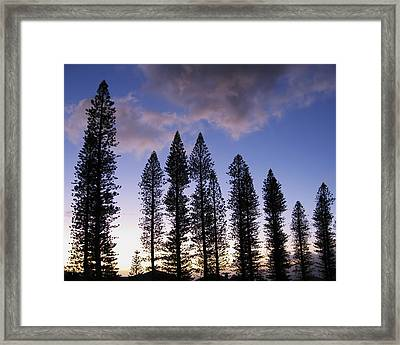 Trees In Silhouette Framed Print by Adam Romanowicz
