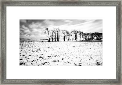 Trees In Snow Scotland Iv Framed Print