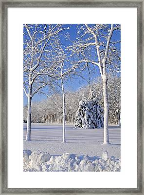Trees In Snow  Wisconsin Framed Print by Anonymous