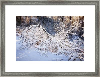 Trees In Snowy Forest After Winter Storm Framed Print by Elena Elisseeva