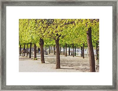 Trees In Spring Framed Print
