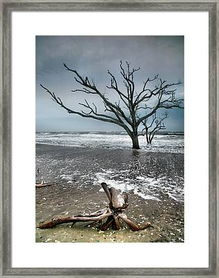 Trees In Surf Framed Print by Steven Ainsworth