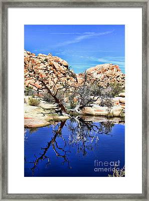 Trees In The Barker Dam Framed Print