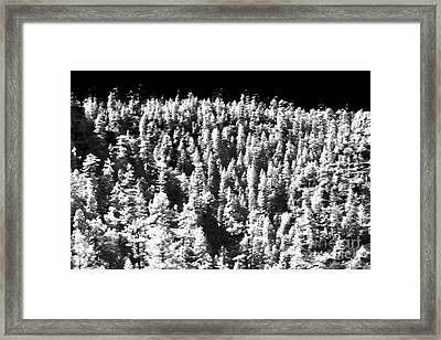 Trees In The Canyon Framed Print by John Rizzuto
