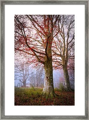 Trees In The Fog Framed Print by Debra and Dave Vanderlaan