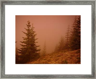 Trees In The Fog Framed Print by Jeff Swan