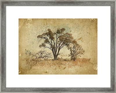 Trees In The Lowland Framed Print by Brett Pfister